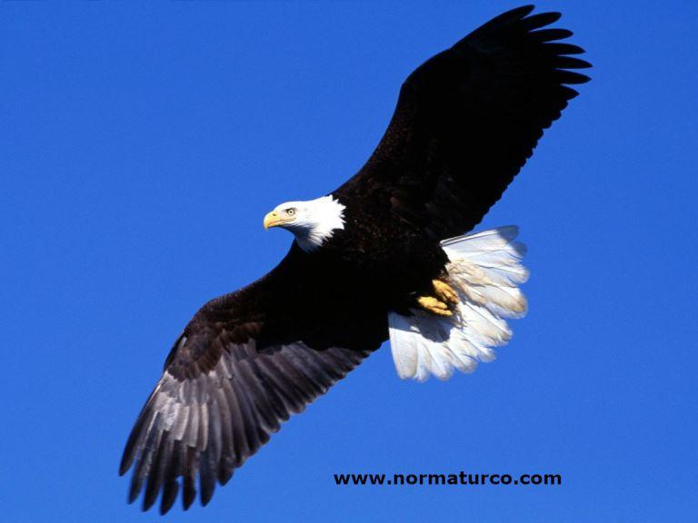 Historias para Reflexionar – El consejo del Aguila